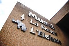 Museo Elefante Venere