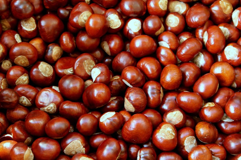 Castagna o marrone